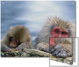 Japanese Macaque (Macaca Fuscata) Mother and Juvenile, Joshinetsu Plateau Nat'l Park, Japan Posters by Ingo Arndt/Minden Pictures