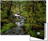 Creek in Temperate Rainforest Along Eyak Lake, Cordova, Alaska Posters by Matthias Breiter/Minden Pictures