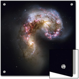 Trailing streamers of gas and stars, the Antennae galaxies collide Posters by Esa And Nasa