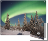 Northern Lights or Aurora Borealis over Boreal Forest, North America Print by Matthias Breiter/Minden Pictures