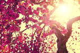 Spring Nature Background Blooming Tree over Sunny Sky. Spring Blossom. Apple Flowers. Sun Flare. Vi Posters by Subbotina Anna