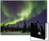 Northern Lights or Aurora Borealis over Boreal Forest, North America Posters by Matthias Breiter/Minden Pictures