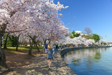 Spring in Washington DC - Cherry Blossom Festival at Jefferson Memorial Poster by  Orhan