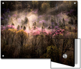 Misty View of a Forested Hillside with Trees in Bloom Posters by Sam Abell