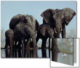 A herd of elephants drink from a water hole in Etosha National Park Print by Des & Jen Bartlett