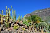 Cactus Garden Photographic Print by Oleg Znamenskiy
