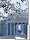 Closeup of Cherry Blossoms with Jefferson Memorial, Washington, D.C. Posters by Kenneth Garrett