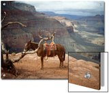 Saddled Mule and Scenic View of the Grand Canyon Prints by David Edwards