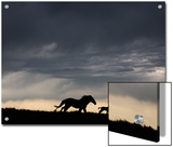 Wild Horse and Foal Running Free in a Mustang and Burro Sanctuary Posters by Melissa Farlow