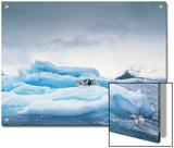 Adelie Penguin (Pygoscelis Adeliae) Group on Iceberg, Antarctic Peninsula Prints by Gerry Ellis