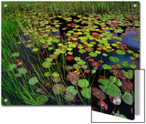 Pond with Lily Pads and Grasses, Cape Cod, Massachusetts Print by Tim Fitzharris/Minden Pictures