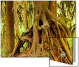 Closeup of a Tree Trunk in a Rainforest, Washington Prints by Tim Laman