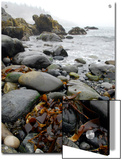 Seaweed Among Stones on a Rocky Shore with Gentle Surf Art by Anne Keiser