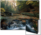 Small Waterfall on Hunting Creek in Fall, Catoctin Mountain Park, Maryland Prints by Gerry Ellis