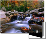 Little Pigeon River Among Rocks and Maple Leaves, Great Smoky Mountains Nat'l Park, Tennessee Posters by Tim Fitzharris/Minden Pictures