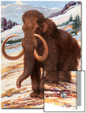 Woolly Mammoth Is a Close Relative to the Modern Elephant Poster by Charles Knight
