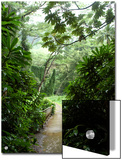 Flooded Path at Manoa Falls, Honolulu, Hawaii Art by Stacy Gold