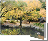 Pond and Autumn Trees in Central Park, New York Posters by Stacy Gold