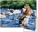 Brown Bear (Ursus Arctos) Sitting on Rock in River, Kamchatka, Russia Posters by Sergey Gorshkov/Minden Pictures