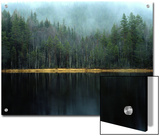 Arrow-Straight Evergreens Are Reflected in a River or Lake; the Rest is Lost in Mist Prints by Mattias Klum