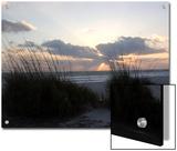 Beach Grass on Anna Maria Island, Holmes Beach, Florida Prints by Stacy Gold