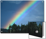 Rainbow over Forest, British Columbia, Canada Posters by Nick Norman