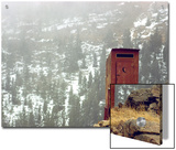 Outhouse Perches on a Hillside Posters by Rex Stucky