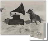 One of Scott's Sled Dogs Listens to a Gramaphone While on Expedition to the South Pole Prints by Herbert Ponting