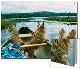 Norwich Terriers Enjoy a Canoe Ride on Lake Kezar Poster by Robin Siegel
