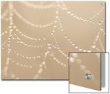 Dew on a Spider Web Poster by Phil Schermeister