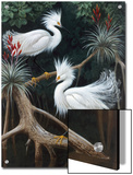 Snowy Egrets Display their Courtship Plumage in a Mangrove Swamp Art by Walter Weber