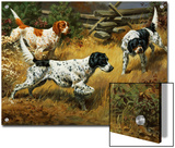 Quail Hides in a Covert from Pointing English Setters Prints by Walter Weber