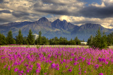 Scenic View of Pioneer Peak with Fireweed in the Foreground, Palmer, Alaska Photographic Print by  Design Pics Inc