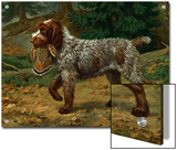 Wire-Haired Pointing Griffon Holds a Dead Bird in its Mouth Prints by Walter Weber