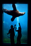 Silhouette of Children Watching a Sea Lion in the Seward Sealife Center in Seward, Alaska Photographic Print by  Design Pics Inc