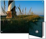 Sea Oats Bending in Wind Near the Cape Hatteras Lighthouse Print by Steve Winter