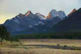 Moose Grazing at Sunset with Mountains in the Background; Alberta Canada Photographic Print by  Design Pics Inc