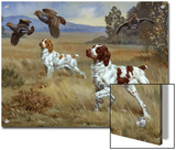Brittany Spaniels Flush Three Birds from Cover in a Meadow Prints by Walter Weber