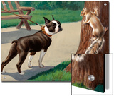 Boston Terrier Eyes a Nervous Squirrel Posters by Walter Weber