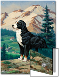 Bernese Mountain Dog Stands on a Hill Overlooking a Rural Valley Prints by Walter Weber