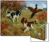 Energetic English Springer Spaniels Flush a Bird from its Cover Prints by Walter Weber