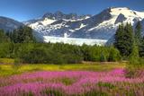 Scenic View of Mendenhall Glacier and Fireweed in the Foreground, Juneau, Alaska Photographic Print by  Design Pics Inc