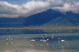 Flamingoes in Crater Lake at Ngorongoro Photographic Print by  Design Pics Inc