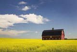 Red Barn in a Flowering Canola Field with Blue Sky and Clouds South of High River; Alberta Canada Photographic Print by  Design Pics Inc