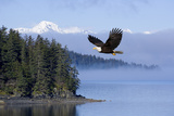 Bald Eagle in Flight over the Inside Passage with Tongass National Forest in the Background, Alaska Photographic Print by  Design Pics Inc