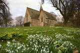 White Flowers with a Small Church in Background; Northumberland,England Photographic Print by  Design Pics Inc