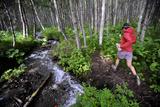 Woman Jogging Through a Birch Forest Alongside a Small Stream, Alaska Fotografisk tryk af  Design Pics Inc