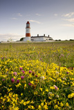 Souter Lighthouse; South Shields Marsden South Tyneside Tyne and Wear England Photographic Print by  Design Pics Inc
