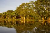 Traditional Amazon Village Photographic Print by  Design Pics Inc