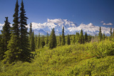 Mt Mckinley and the Alaska Range as Seen from Inside Denali National Park Alaska Summer Photographic Print by  Design Pics Inc